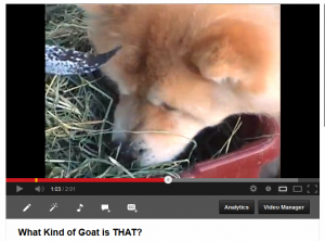 What Kind of Goat is THAT