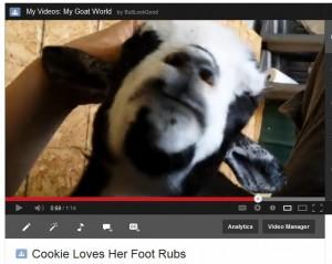 Cookie Loves Foot Rubs