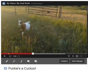 Pumpkin is a Cuckoo