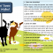 Bustin Goat Myths