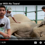 Help Rescue Animals Like Raju the Elephant