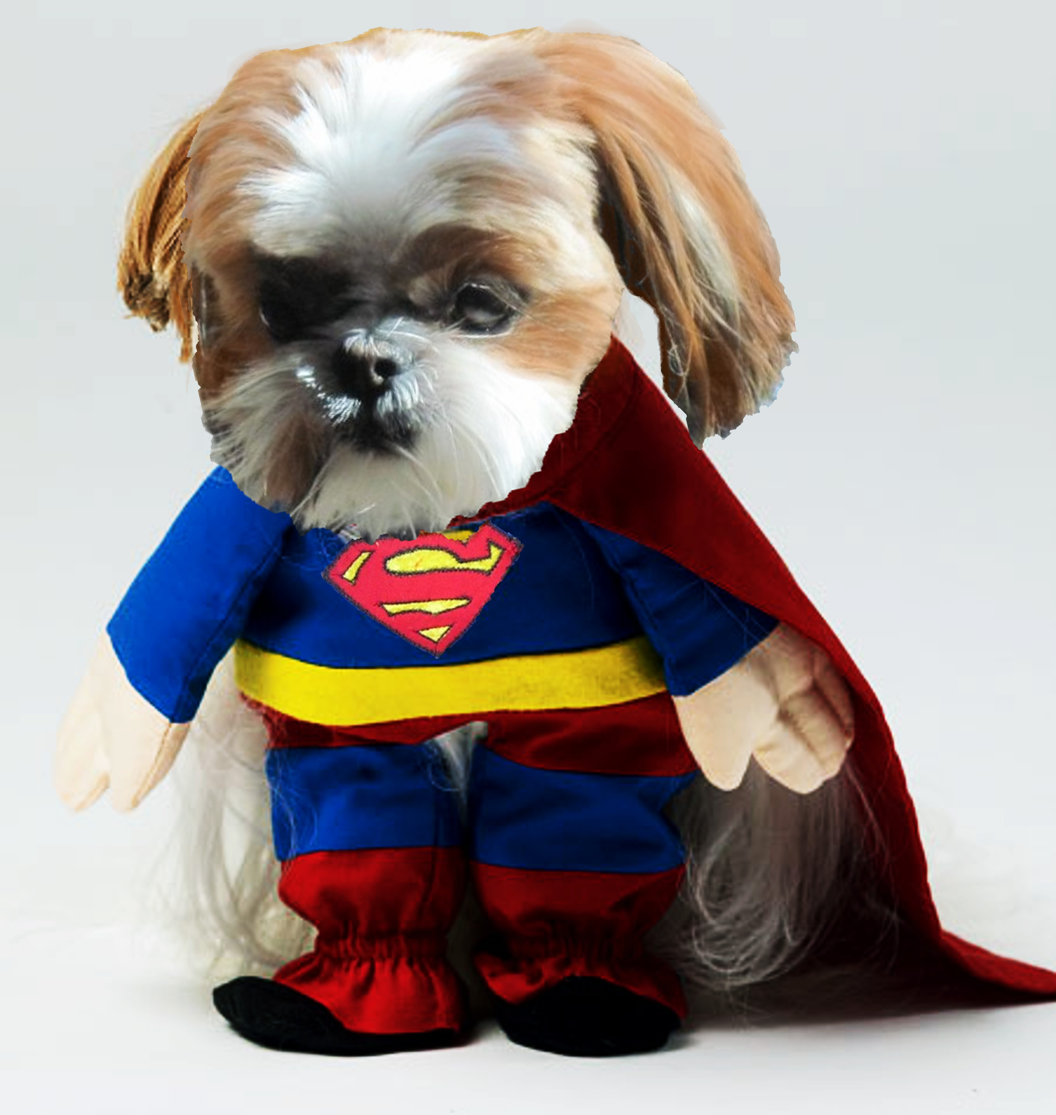 snickers-the-super-dog