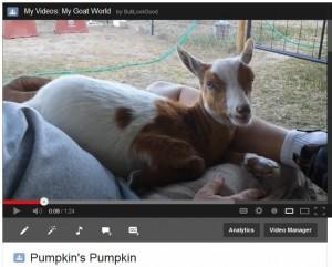 Pumpkin's Pumpkin