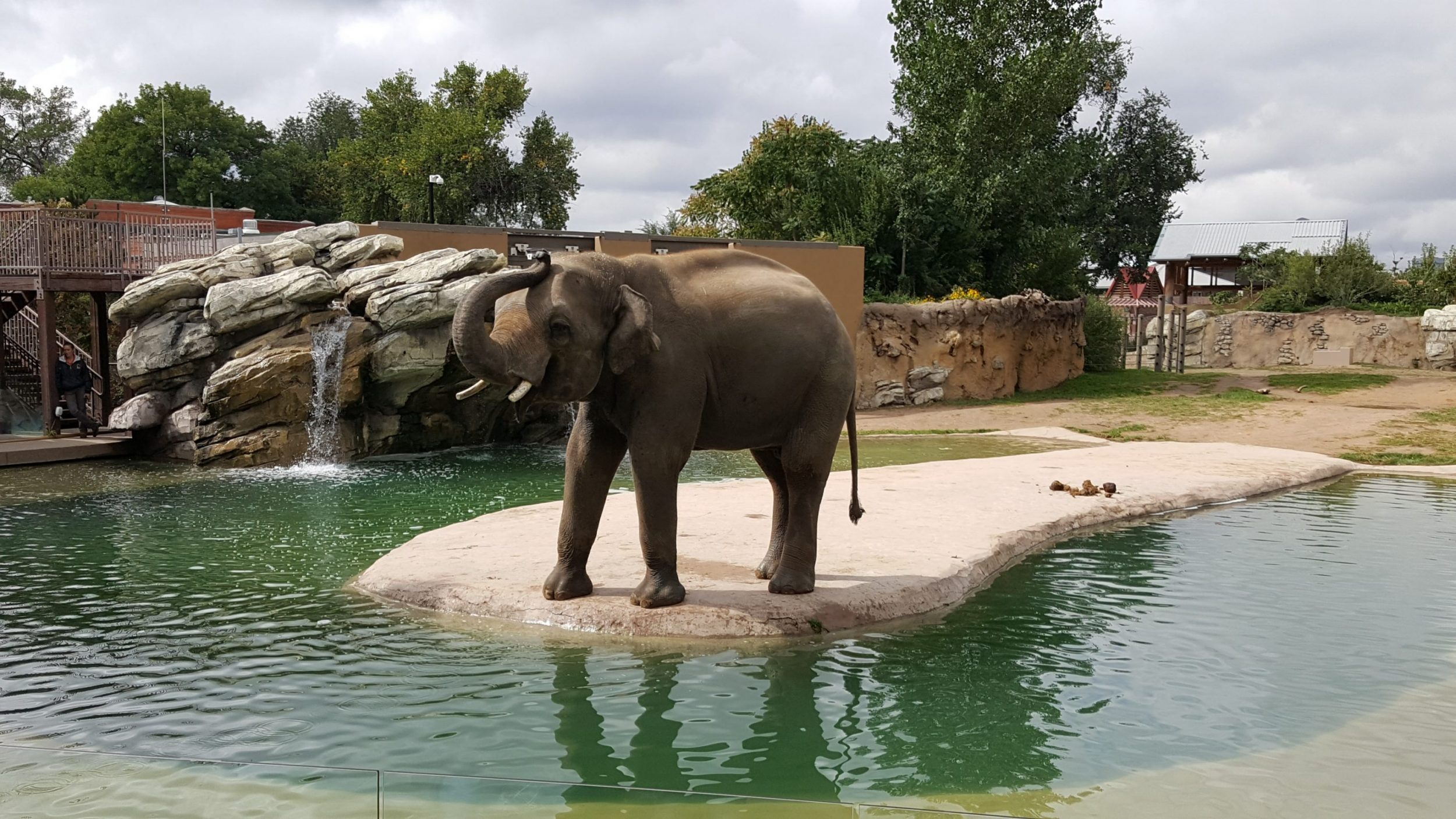 Bodhi the Talking Elephant Shows Off at the Denver Zoo
