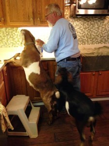 Dad with Goats