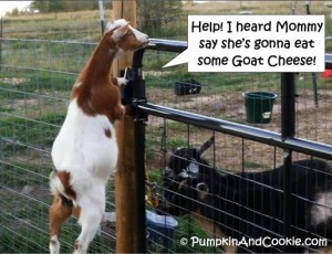 Help Mommy Eat Goat Cheese