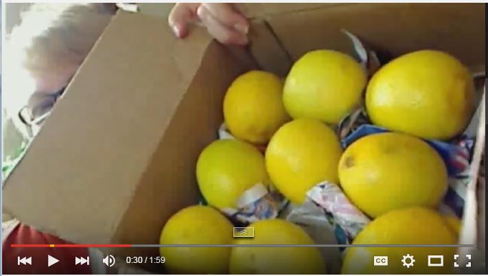 Sherri Loves Lemons